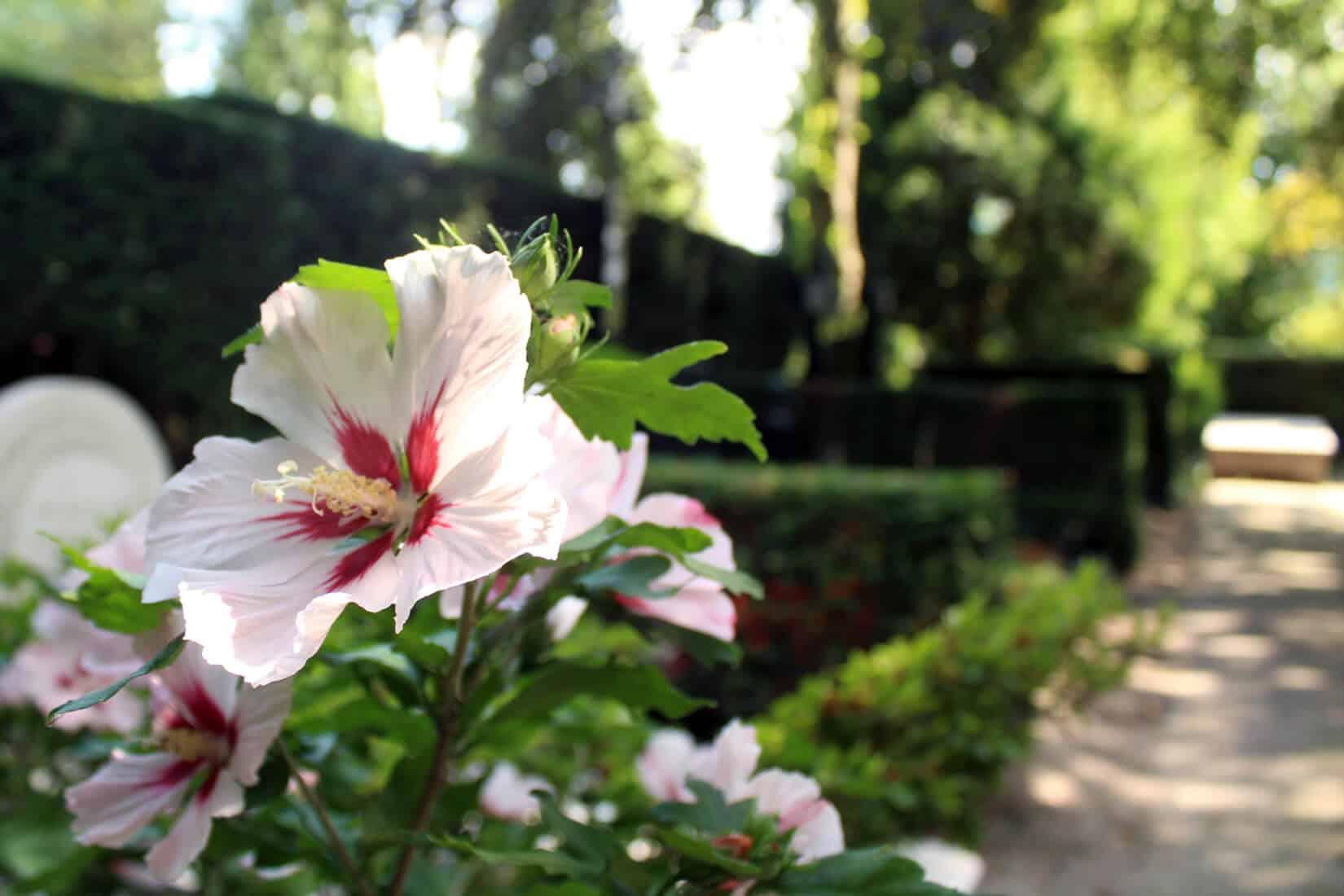 Wat zijn de 7 beste graf planten?