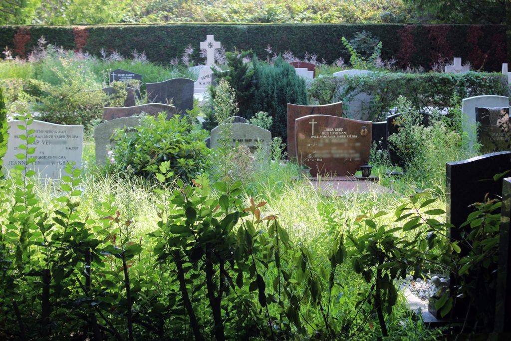 onkruid op begraafplaats
